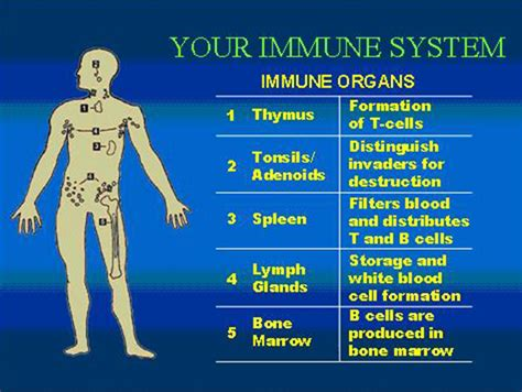 immune how your defends and protects you bloomsbury sigma books protecting your immune system wikybrew