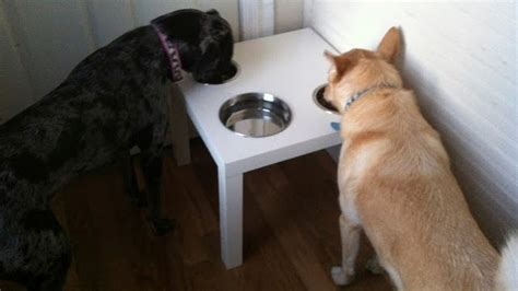 Dogs At Dinner Table by Modify An Ikea Table Into A Dining Table Lifehacker Australia