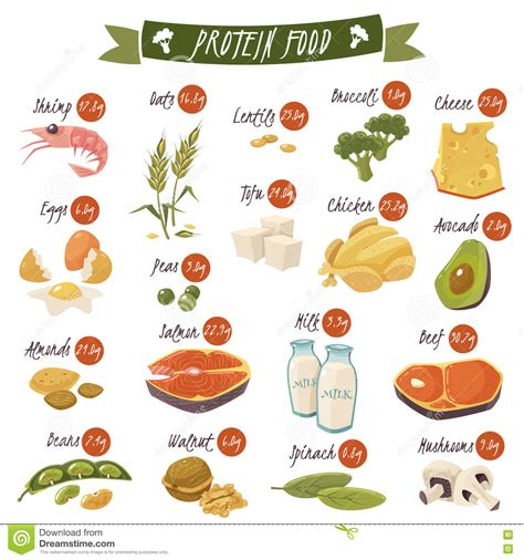 protein in salmon protein food icons collection for healthy diet with salmon