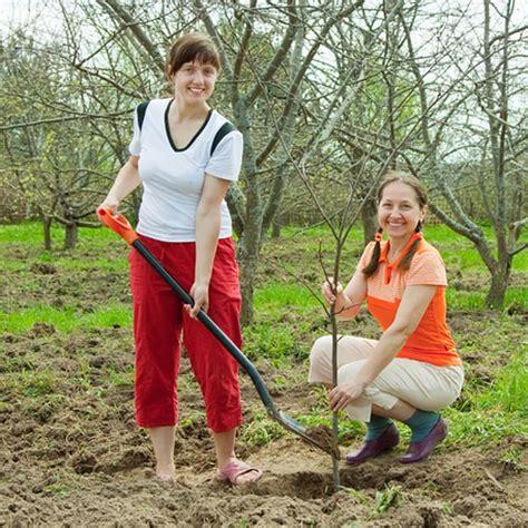 Obstb Ume Pflanzen Wann 4054 obstb 228 ume und obststr 228 ucher pflanzen