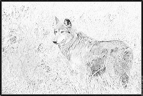 Coloriage Loup 3 Petit Cochons Dessin De Loup L