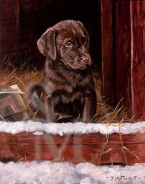chocolate labrador puppy pack   christmas cards  winter