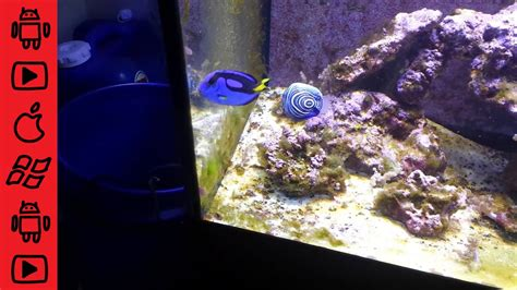 my is acting strange and hiding blue tang acting and hiding in rocks happened once i started dosing nopox