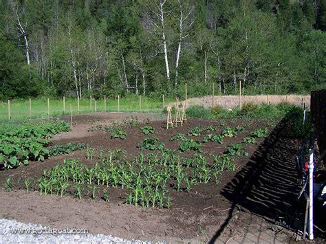 designing a vegetable garden designing a vegetable garden gottagoat designing a