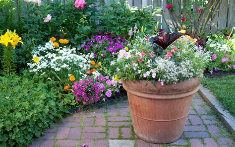 container gardening do s and don ts