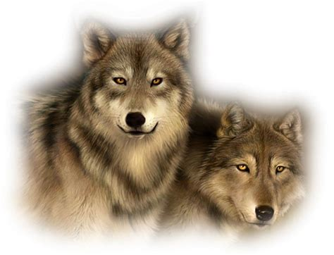 30 best stylized wolves images on 99 best my paint shop pro clipart png images on psp and animaux