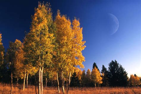 andrew l trees andrew l seidel