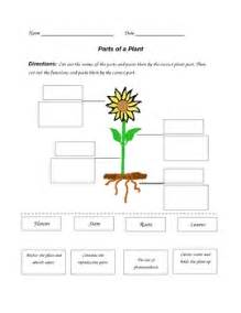 parts of a plant worksheet by paula jett teachers pay