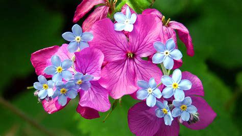 imagenes flores hd nature wallpaper flores slateblue lightsteelblue