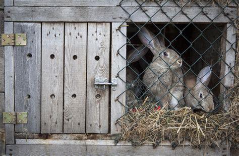 diy zelf een konijnenhok maken het woonschrift