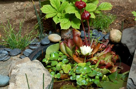 the best plants for a water garden 15 flowers for water garden plants best choices for small ponds