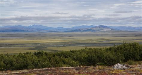 Search In Alaska Where To Find Tundra Trees In Nome Alaska