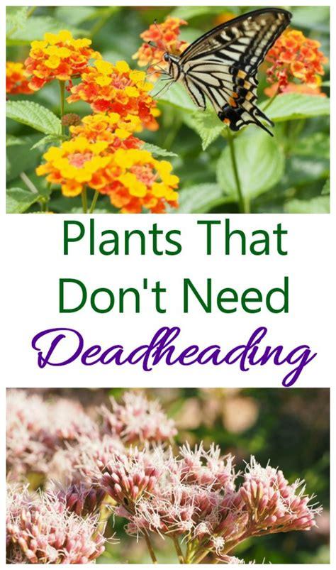 plants  dont  deadheading