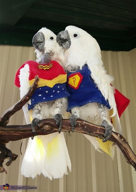super parrot   bird costume diy instructions