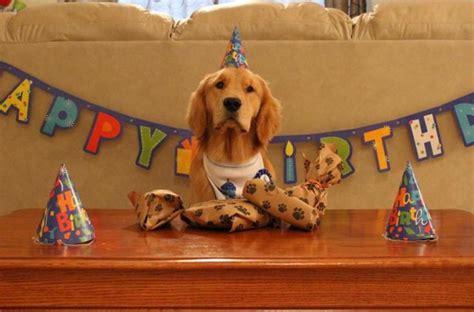 golden retriever happy birthday images happy birthday pictures or with golden retrievers breeds picture