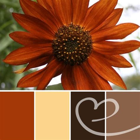 labor day colors beautiful burnt orange color palette used in a labor day