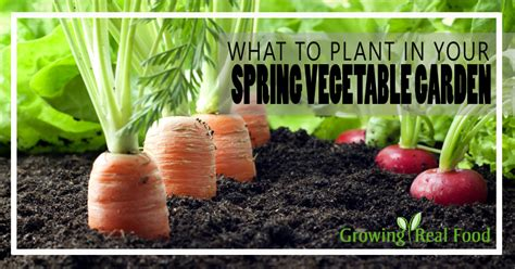 how to plant a vegetable garden in your backyard what to plant in your vegetable garden