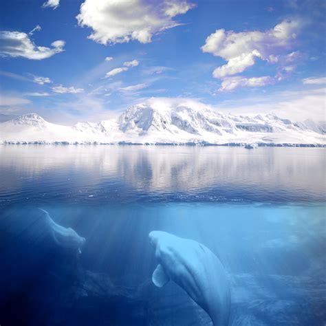 imagenes ocultas de la naza agua wikiquote
