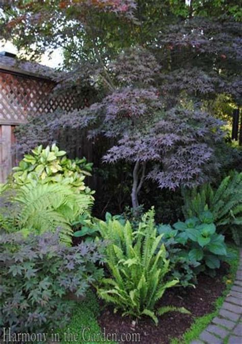 flowering evergreen shrubs for shade 25 best ideas about shade shrubs on garden