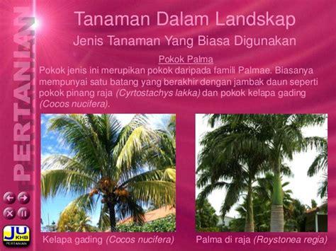 Tanaman Passiflora Palmana landskap