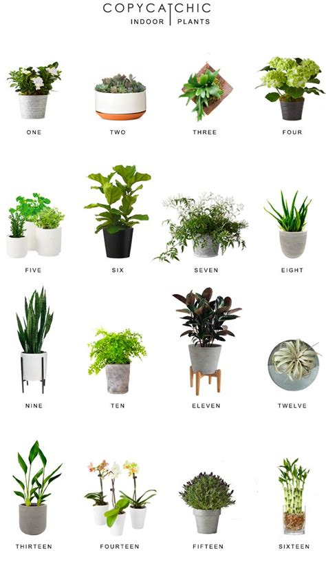 decorative plants for home de 25 bedste id 233 er inden for copy cat chic p 229