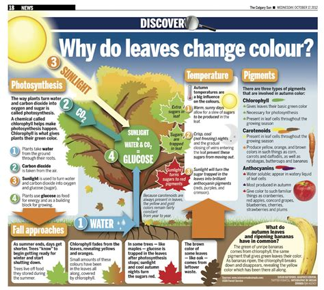why do leaves change color and fall it all