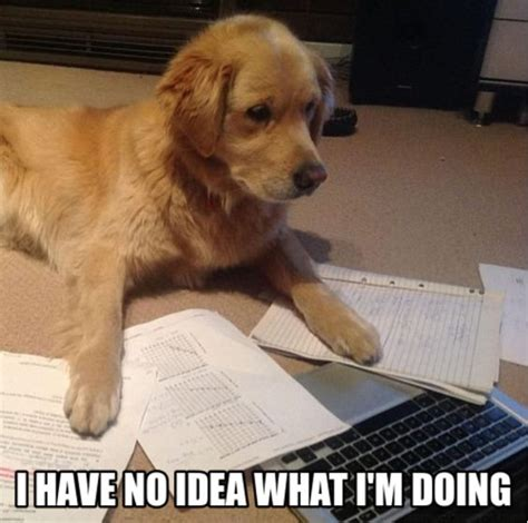 puppy studying lol who else feels like this when studying for exams exams