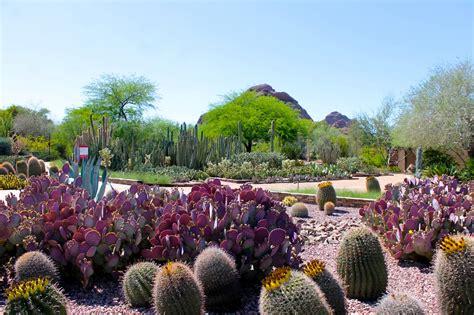 Botanical Gardens Scottsdale by The Desert In Bloom At The Desert Botanical Garden In