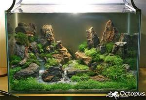 mountain aquascape slobodan lazarevic promised land size of tank is 50cm x