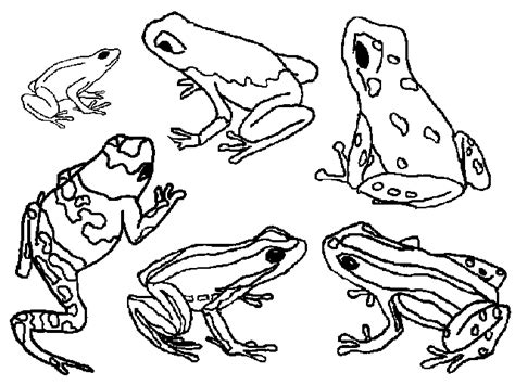 coloring page poison dart frog absolute frogs