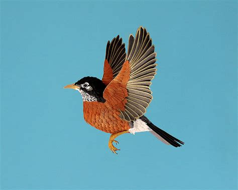 new hyperrealistic paper birds by diana herrera