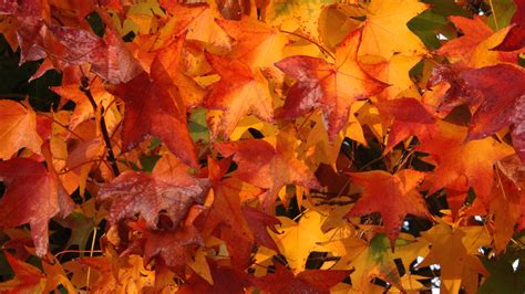 tumblr themes free autumn fall sale what to sell bluegrass parents of twins