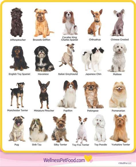 types  toy breeds dog breeds types  dogs breeds