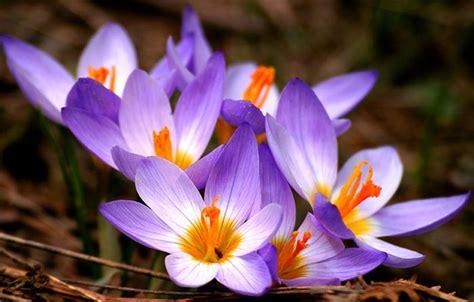 Espectaculares Imagenes De Las Flores Mas Lindas Del Mundo | flores espectaculares imagui