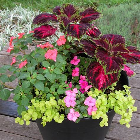 Best Plants For Balcony Garden Flower Container Gardening