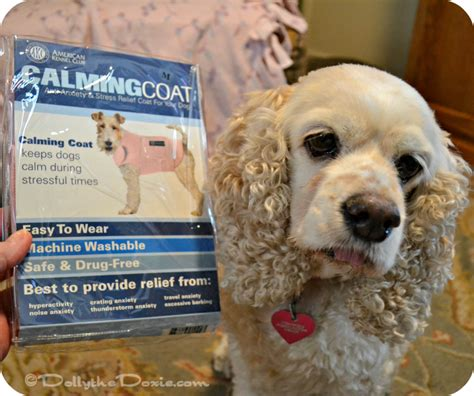 calming coat for dogs 3 reasons to use a calming coat for your