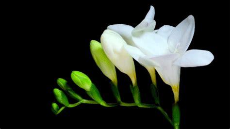 flowers blooming flower blooming gif tumblr