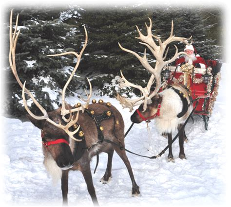 top 28 where can i see reindeer this christmas rudolph
