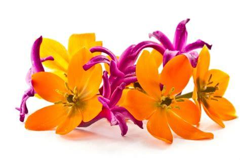 fiori da giardino primaverili fiori da giardino primaverili black hairstyle and haircuts
