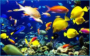 Aquarium screensaver mac hd   Download free