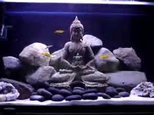 Rock Your World ? How to set up and aquascape a proper Cichlid
