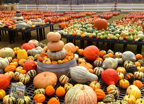 fun fall family friendly events in the twin cities pratt remodeling free hd wallpapers