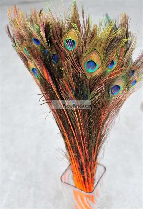 """Dyed Orange Peacock Eye Feathers 30 35"""" 12 Pieces"""