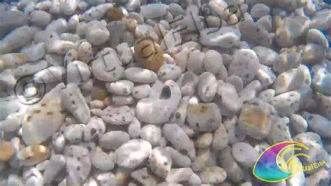 spiaggia delle ghiaie isola d elba spiaggia le ghiaie 400 m portoferraio isola d elba