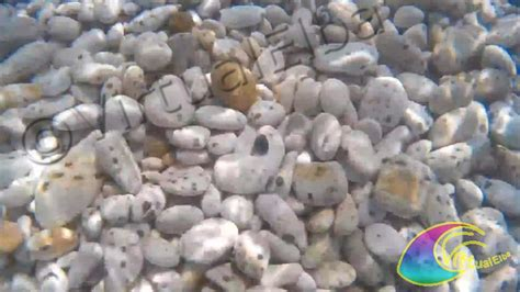 spiaggia le ghiaie elba spiaggia le ghiaie 400 m portoferraio isola d elba