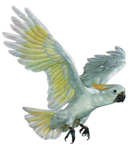 botanischer garten berlin vogelausstellung kakadu bis zebrafink vogelausstellung im botanischen
