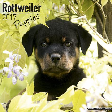 rottweiler puppies ireland rottweiler puppies calendar 2017 pet prints inc