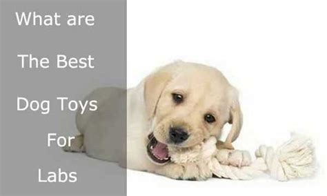 toys for bored dogs best chew toys for labs high quality toys for bored labs alldogsworld