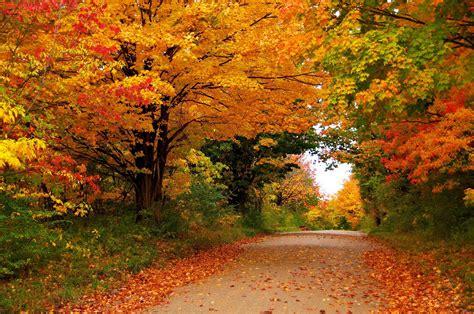 seizoenen herfst bomen gebladerte natuur hd desktop