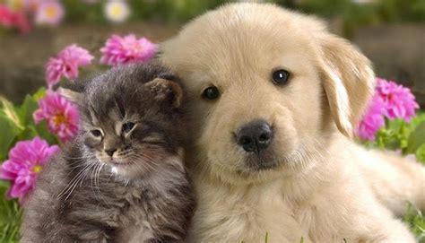 imagenes animales recien nacidos animales recien nacidos imagenes imagui